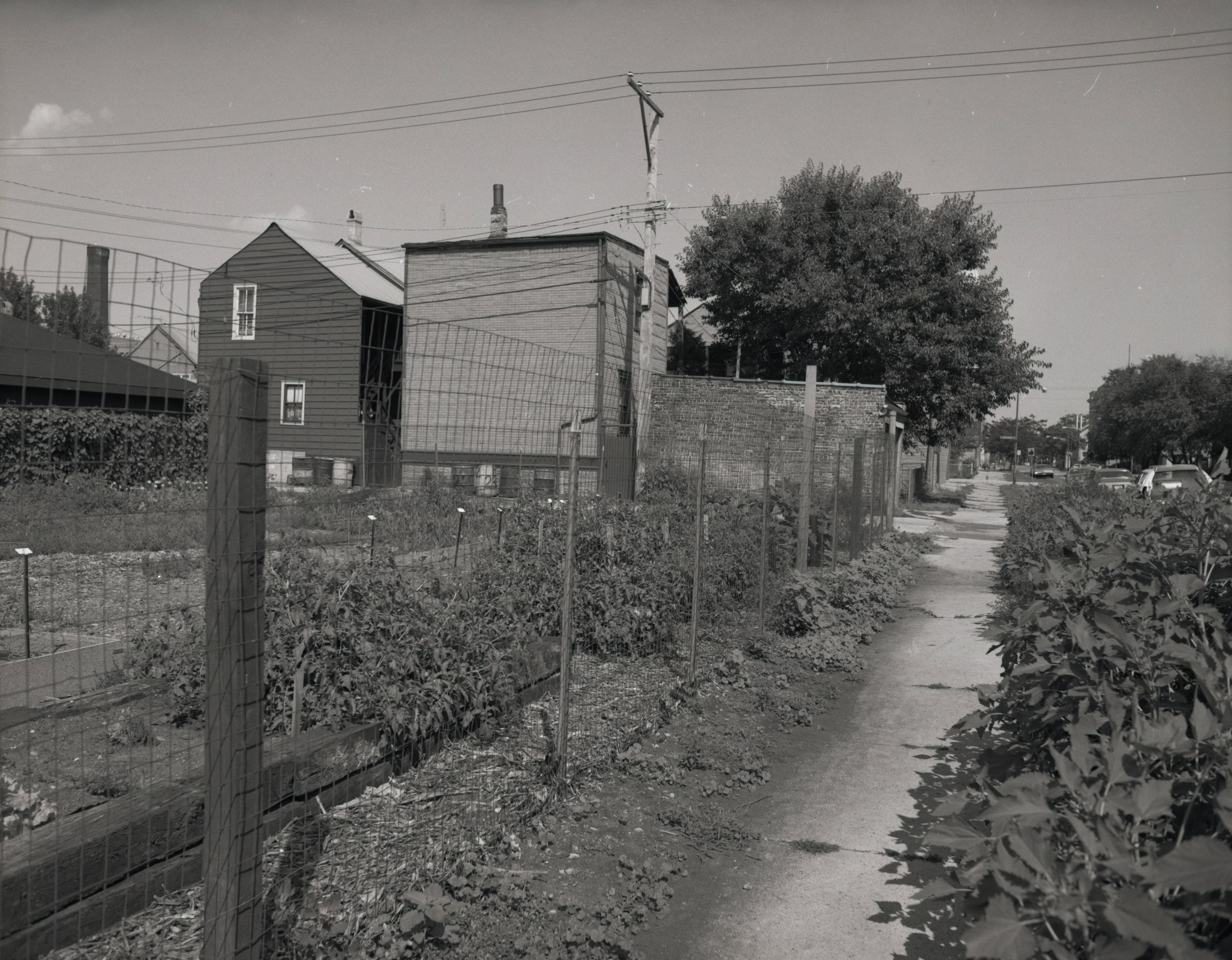 A fence separates two urban gardens. There are residential buildings in the background.