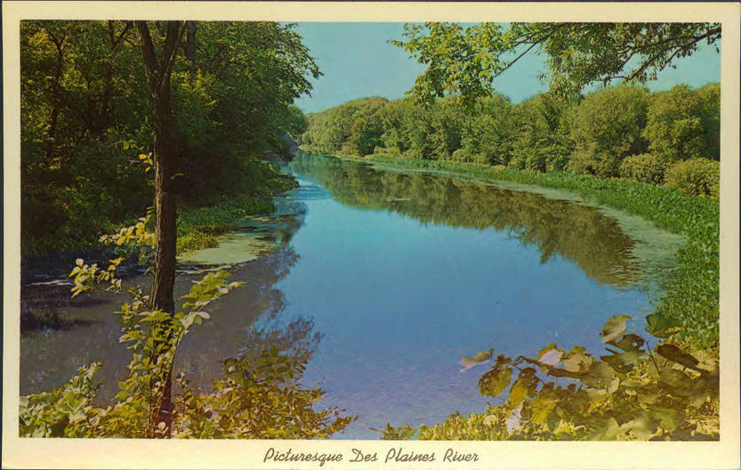 Postcard with clear river cutting through a lush forest