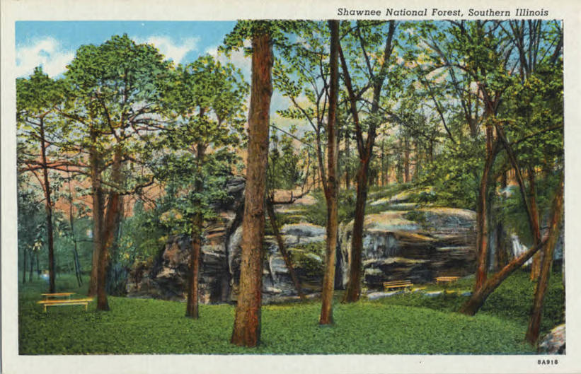 Postcard featuring picnic grounds among evergreens