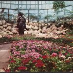 Postcard showing the interior of the Lincoln Park Conservatory with display of spring flowers