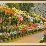 Front of postcard showing the interior of the Washington Park Conservatory in Chicago, Illinois